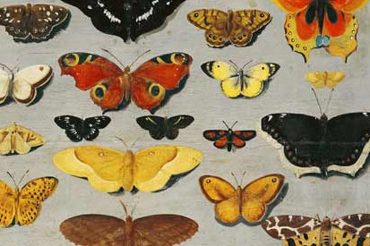 Collection of Butterflies' canvas and studies from famous artists.