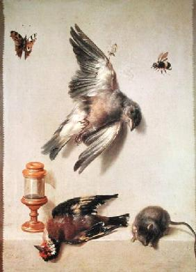 Still Life of Dead Birds and a Mouse