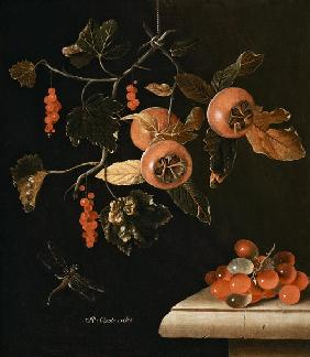 Still Life of Medlars, Redcurrants, Grapes and a Dragonfly