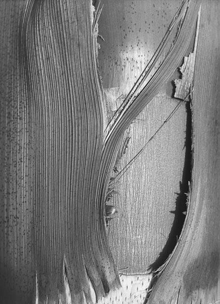 Close up of bark of trees trunk (b/w photo)