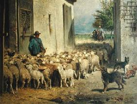 Return to the Sheepfold