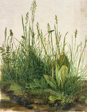 Great piece of turf - study of weeds 1503