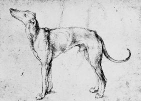 A.Dürer, Greyhound / Draw./ c.1500
