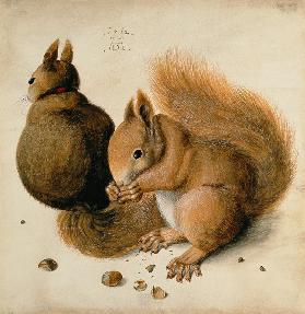 Squirrels 1512
