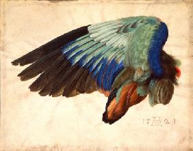 Wing of a bird. 1524