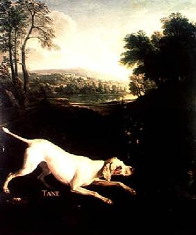 Louis XIV's Dog, Tane