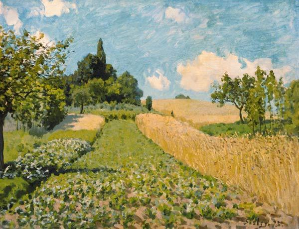 Summer landscape with fields