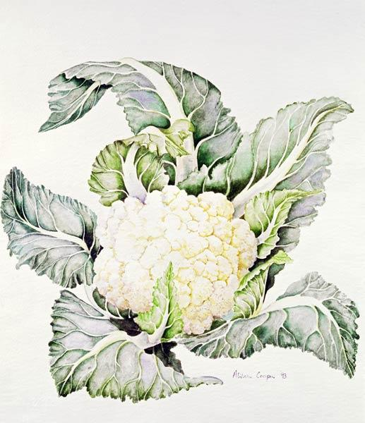 Cauliflower Study, 1993 (w/c)