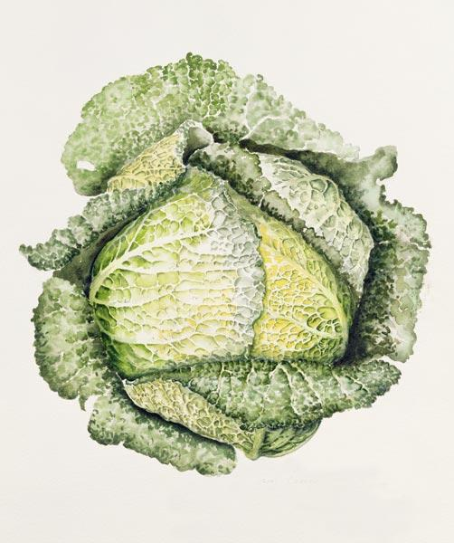 Savoy Cabbage (w/c)