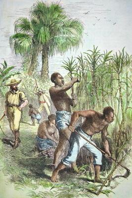 Slaves working a sugar field, c.1860 (coloured engraving)