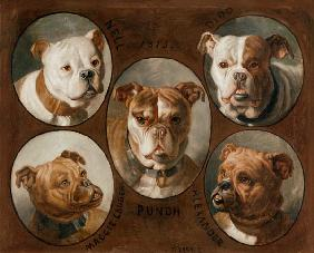 Nell, Dido, Punch, Maggie lauder and Alexander, English Bulldogs