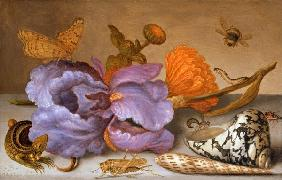 Still life depicting flowers, shells and insects (oil on copper) (for pair see 251378)