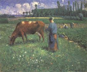 Girl with cow on a pasture
