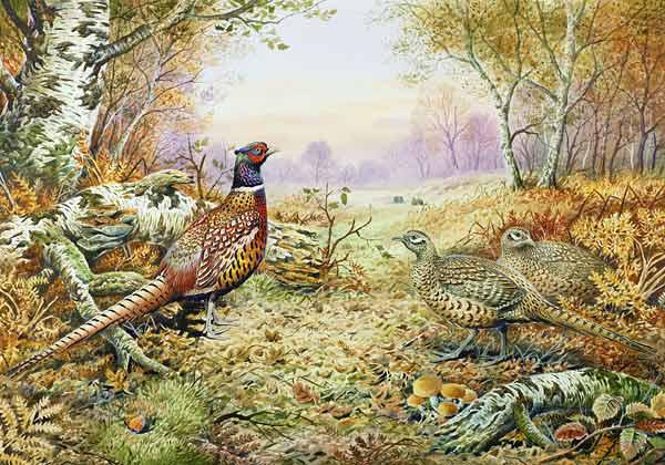 Pheasants in Woodland