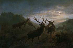Red deer pack in the moonlight.