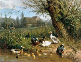 Ducks with chicks at the water