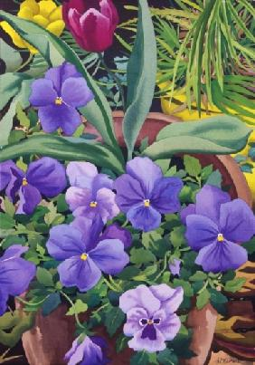 Flowerpots with Pansies