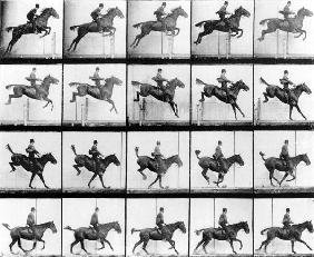 Man and Horse jumping, from ''Animals in Motion'' by Muybridge, London, published 1907 (b/w photo)