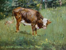 Young Bull in a Meadow