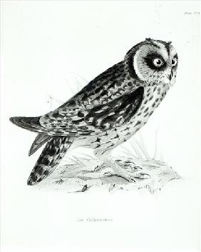 Owl after Charles Darwin