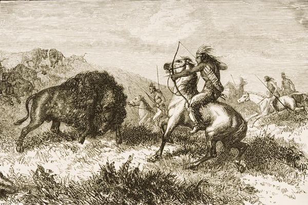 The plains bison hunt essay