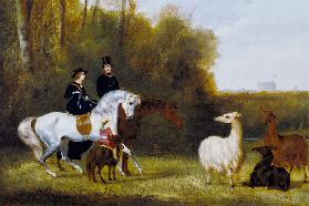 Queen Victoria, Prince Albert and the Prince of Wales at Windsor Park with their Herd of Llamas