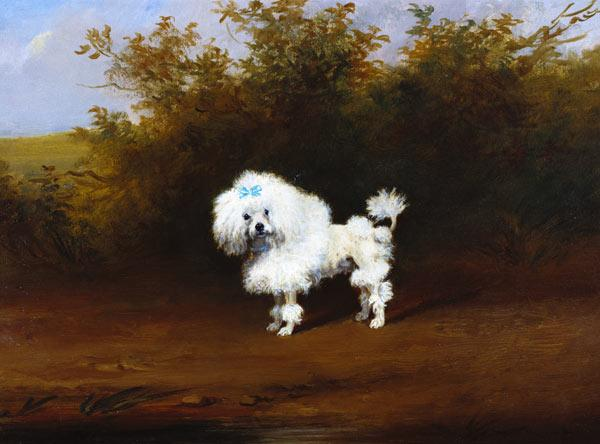 A Toy Poodle in a Landscape (board)