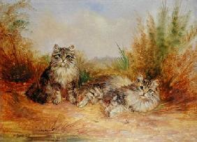 Two Tabby Kittens in a Rural Landscape