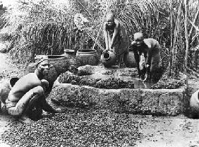 Making palm oil in Dahomey
