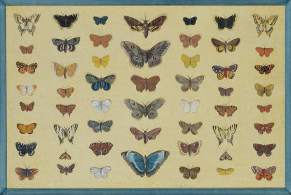 A collage of butterflies and moths including the Camberwell Beauty, the British Swallowtail, the Sca