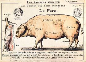 Cuts of Pork, illustration from a French Domestic Science Manual by H. de Puytorac