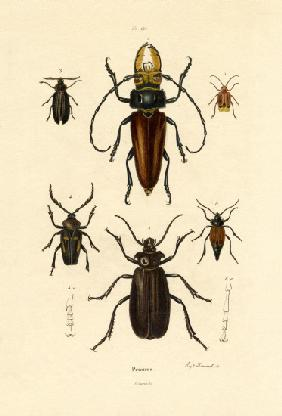 Long-horned Beetles