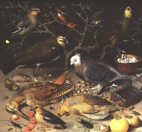 Flegel, Georg : Still Life of Birds and In...