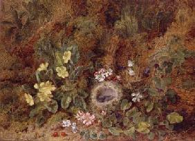 Still Life with Bird's Nest and Wild Flowers