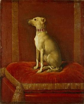One of Frederick II''s Italian greyhounds