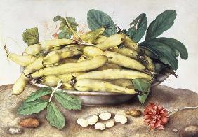 Still Life with Broad Bean Pods (w/c on parchment)