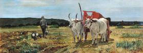 Ox-cart in the Tuscan Maremma