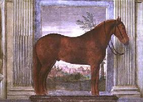 Sala dei Cavalli, detail showing a portrait of a chestnut horse from the stables of Ludovico Gonzaga