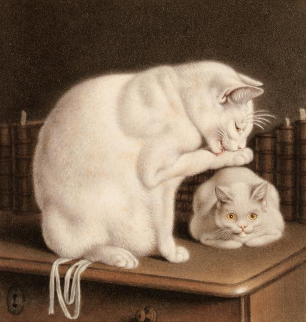 Two white cats on a table with books