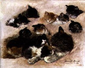 Study of cats and kittens