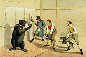 'Bear Baiting', pub. by Thomas McLean, 1820, (sporting print)