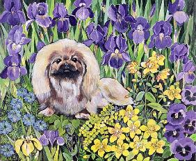 Peke in the Flower Bed (acrylic on canvas)