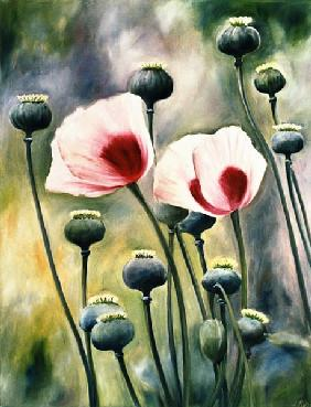 Kuhn, Ingeborg : Poppy with buds