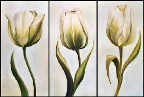 Kuhn, Ingeborg : Three tulips