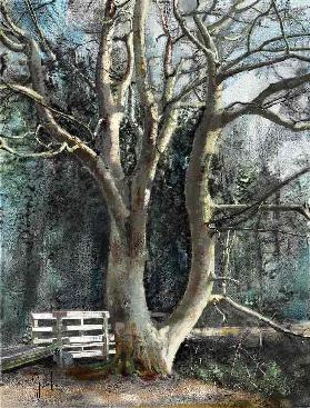Sheilas tree
