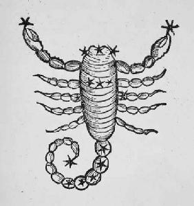 Scorpio (the Scorpion) an illustration from the 'Poeticon Astronomicon' by C.J. Hyginus, Venice