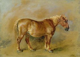 A Suffolk Punch (oil on paper laid onto canvas)