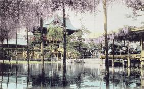 Wisteria blossom over the pond in the Kameido Temple Gardens, Tokyo, late 19th century (hand coloure