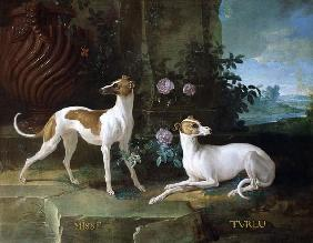 Misse and Turlu, two greyhounds of Louis XV