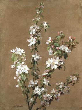 Benner, Jean : Apple Blossom